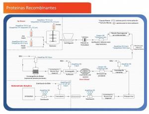 Proteínas Recombinantes: Diagrama de Flujo