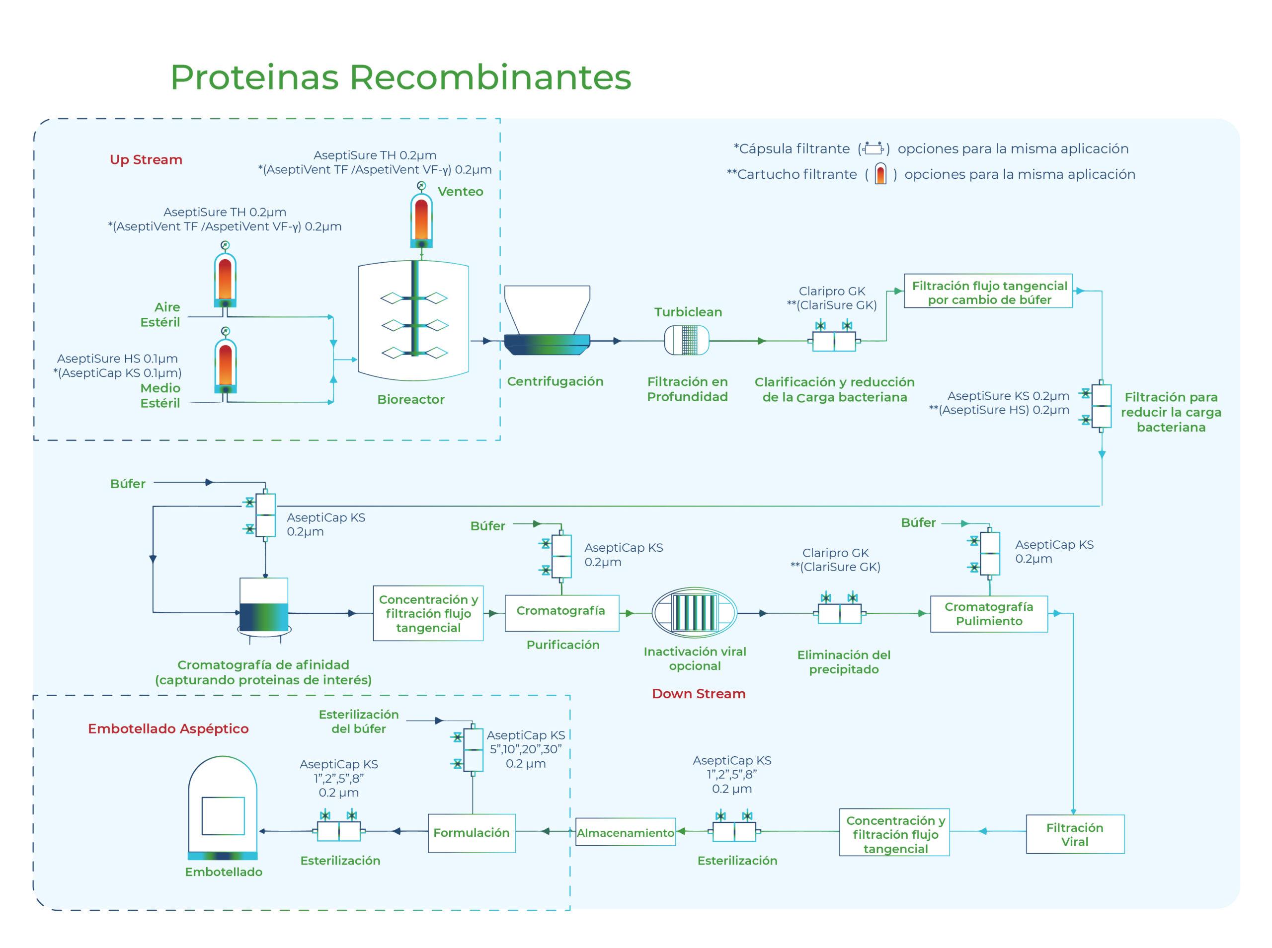 Diagrama Proteinas Recombinantes. Gesfilter